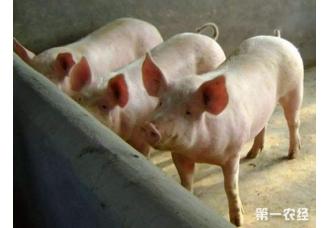 <b>下半年猪价走势如何?第四季度生猪价格或达到2019年顶峰</b>