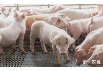 如何判断母猪的繁殖性能是否出现障碍?