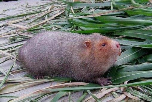 广西板旺村:竹鼠养殖走出了一条脱贫致富路