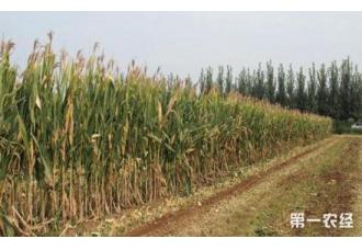 <b>玉米秸秆高效利用技术研发方面有了新进展</b>
