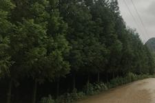 """林业扶贫:贵州贫困山区""""种树卖空气"""" 农民种植碳汇树增收"""