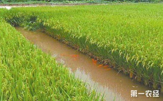 稻渔综合种养