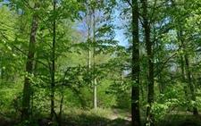 福建省特色林业工作:泉州市近自然森林经营试点