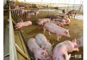 农业农村部:优化调整生猪调运措施,千方百计稳定生猪生产