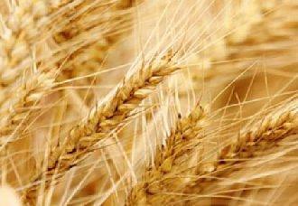 我国新麦大量上市 面粉价格随之下调