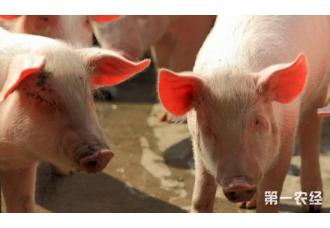 """<b>中国暂停所有加拿大肉类对华出口,加拿大贸易部长:伪造文件的事件很""""罕见""""</b>"""