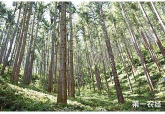 """福建林业生态建设成绩斐然 """"洋林精神""""激励八闽务林人员"""