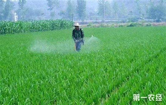 雨季如何提高农药药效?这些技巧帮你忙