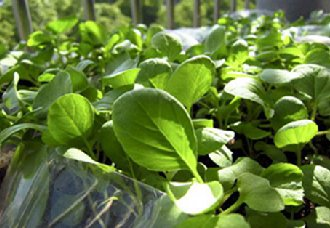 青海民和县种植露地无公害蔬菜业成为富民产业