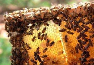 蜜蜂养殖要注意什么?注意以下五点
