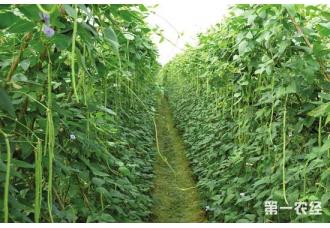 <b>推广蔬菜新品种,推动蔬菜产业高质量发展</b>