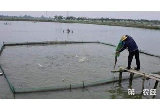 <b>河蟹应激的原因以及防控措施</b>