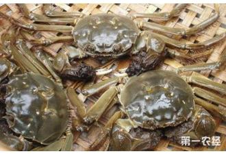 高温季节河蟹常见的病害及其防治措施