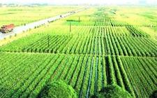 种树绿化不要走套路 要重视森林质量和生物多样性