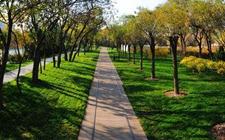 中国林草生态建设成就获外国使节和国际代表点赞