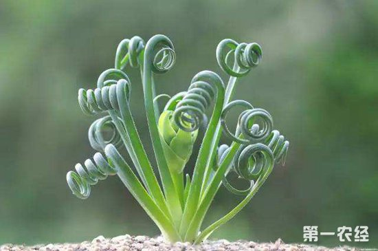 """植物也会""""打喷嚏""""?而且能通过""""喷嚏""""传播疾病?"""