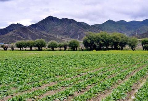云南临翔区累计建成高原特色产业基地238万亩