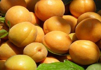 杏子一斤多少钱?