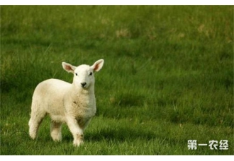 产后母羊和羔羊的护理方法