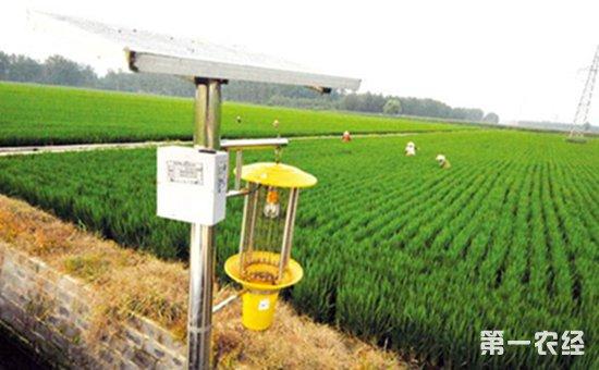 稻田绿色防控