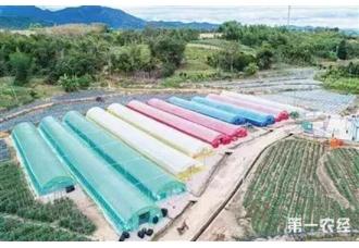 五颜六色的蔬菜大棚,功能各不同