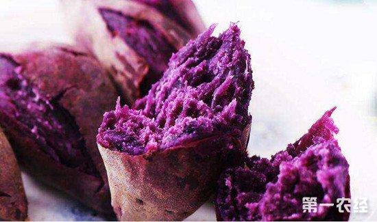 紫薯怎么种?紫薯的种植方法介绍