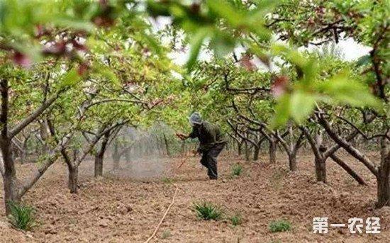 果园土壤酸性过高怎么办?土壤酸化的解决方法