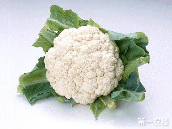 如何保证花椰菜高产?花椰菜的种植技巧