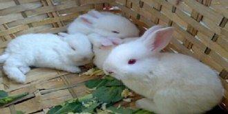 <b>幼兔要怎么饲养?幼兔的饲养技术</b>