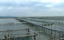 太湖44981亩围网养殖设施被拆除整治完毕