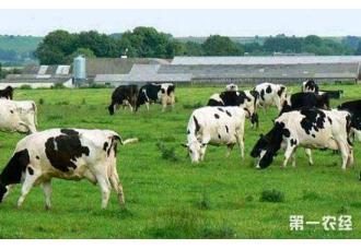 夏季奶牛养殖的常见病以及治疗措施