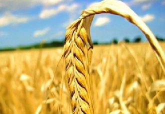 陕西从农业保险项目大幅度增加 助力乡村振兴发展