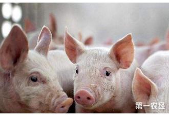 <b>北京猪价6月同比涨幅近五成?上涨原因有哪些?</b>
