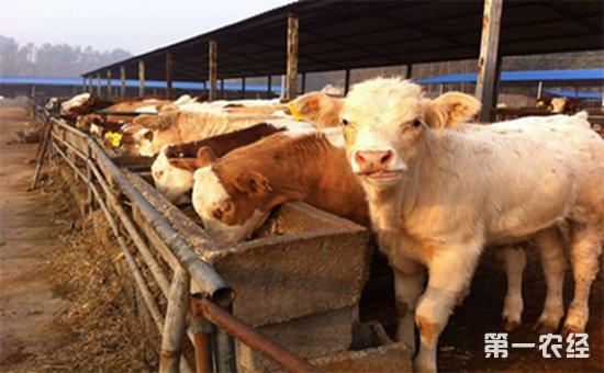 畜牧养殖业
