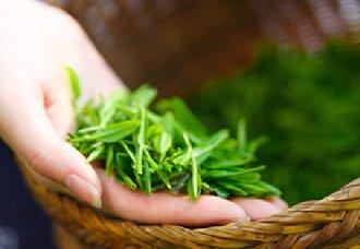 湖北宜昌五峰采花乡将建立万亩欧盟标准茶叶基地