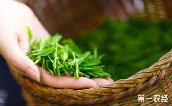 孕妇梦见摘茶叶吃