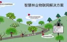 """上海林业局:2020年""""数字林业""""迈向""""智慧林业"""""""