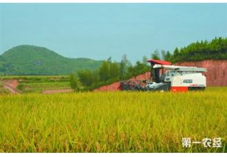 <b>重庆市长寿湖镇龙沟村试种彩色旱稻</b>
