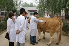 畜牧兽医站是做什么的?兽医就职后薪资待遇如何?