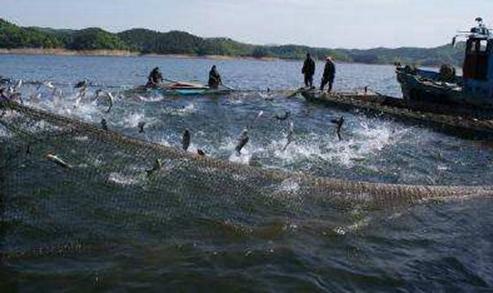 夏季起鱼鱼类容易死亡的原因以及预防方法