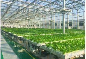 青岛将建国内最大的植物工厂