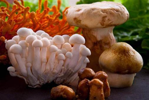 """小小的菌菇为群众们撑起了""""致富伞"""""""