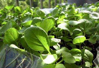 内蒙古科右中旗种植蔬菜为脱贫攻坚战做准备