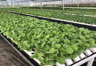北京举行水培蔬菜产业扶贫论坛
