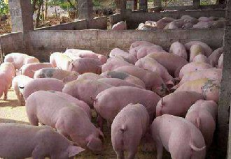 广西查获未经检验检疫猪肉100余斤 目前已进行销毁