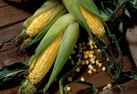 我国玉米市场供需呈平衡 价格上涨趋势可能性低