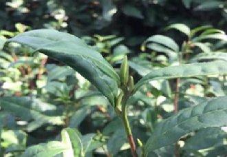 湖南益阳安化黑茶质量检验检测中心正式挂牌成立