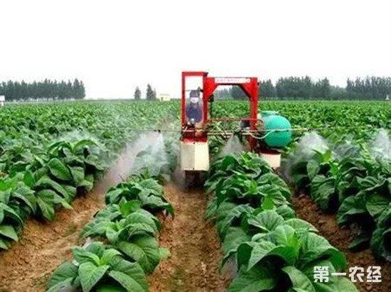 三大肥对农作物的作用及常见补充方法