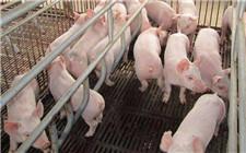 冬季如何做好仔猪的饲养管理工作