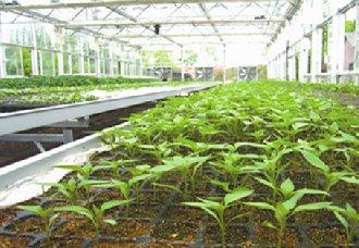 山东聊城将调整蔬菜产业结构加快产业链